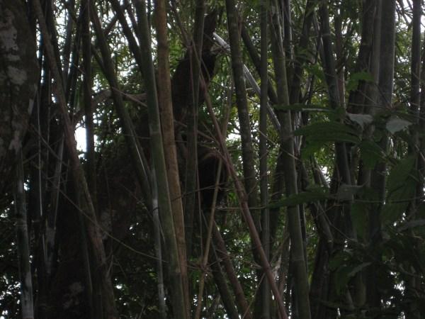 Monkeys 3