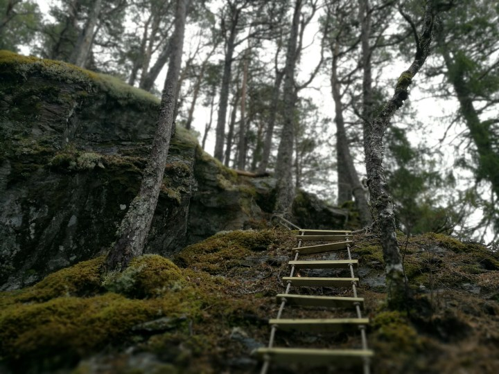 Trollskog og utsikt på Høgkammen