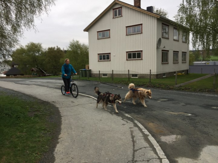 Kosta Mushing sparkesykkel