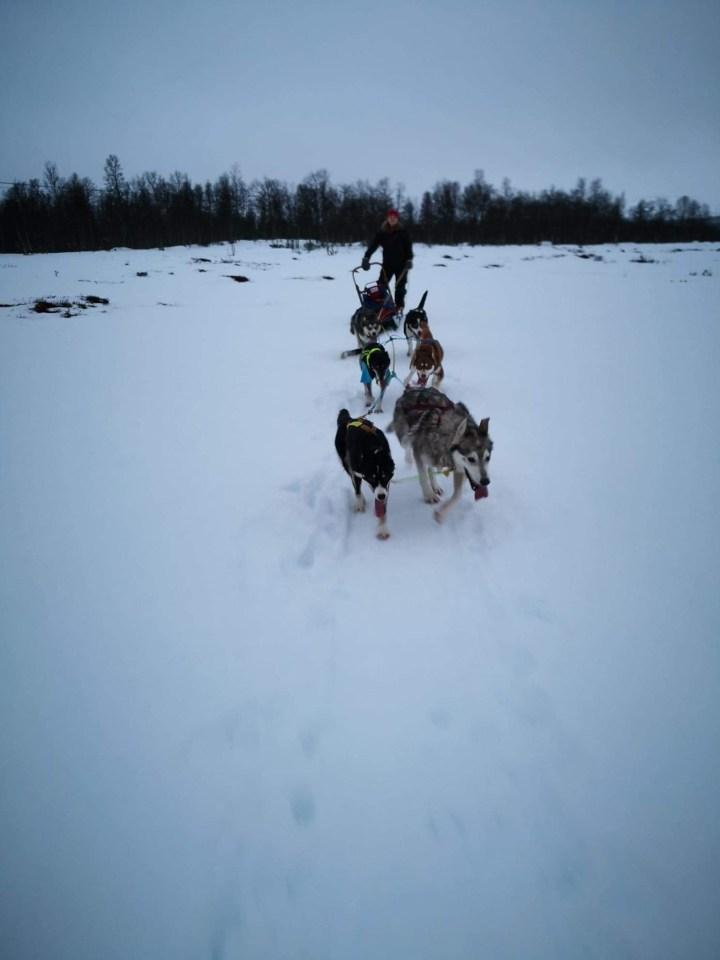 Til Røros for å bli hundekjører