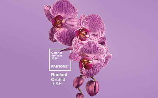 Radiant Orchid, il colore dell'anno 2014 secondo Pantone