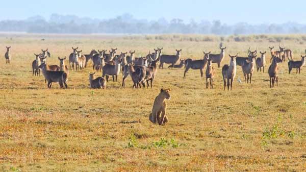 AfricaViviconstile – Nella Viaggio Nuova Mozambico kwP8n0OX