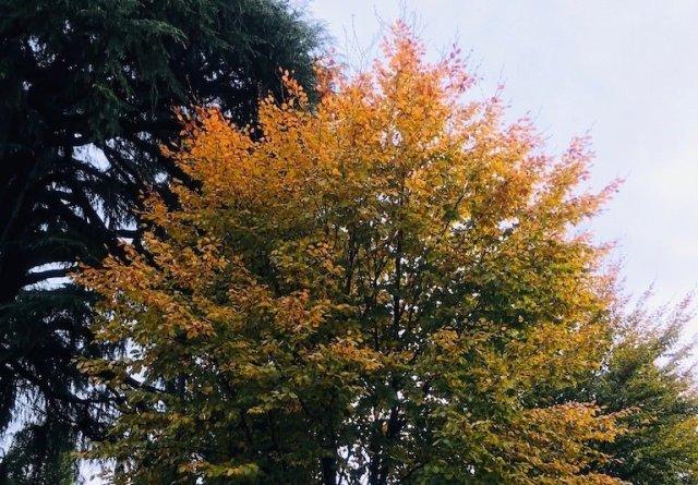 Dal 20 al 25 novembre, 1000 alberi in più a Milano