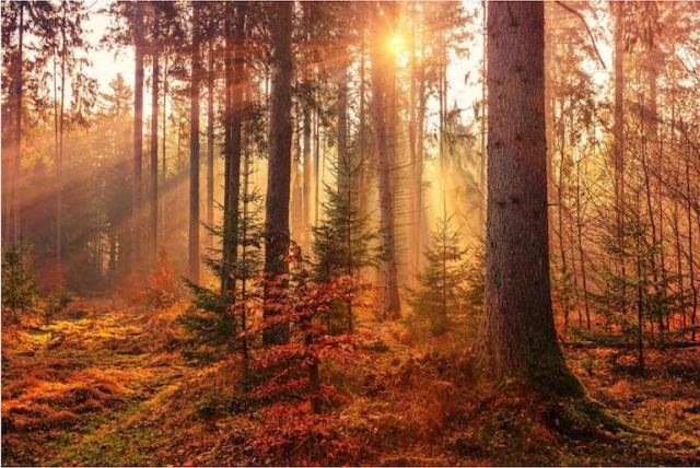 I 4 colori perfetti della fotografia autunnale