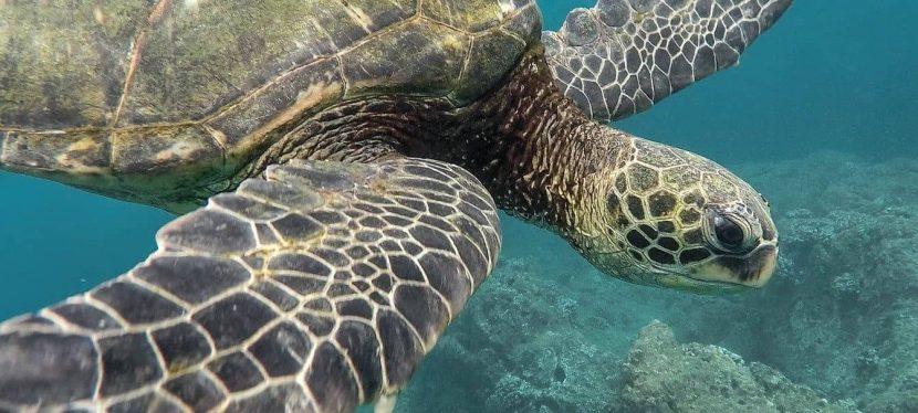 Tulum + Nage avec les tortues + Cenote