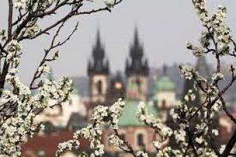 Praga, flores, iglesia
