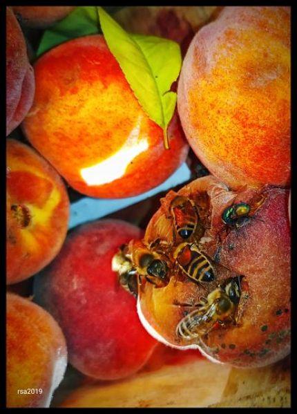abejas, frutas