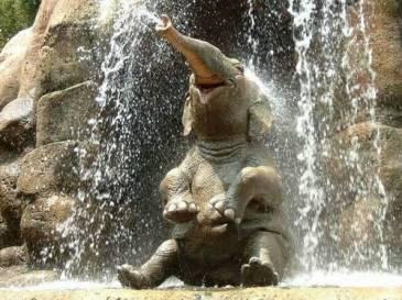 elefante-bajo-el-agua