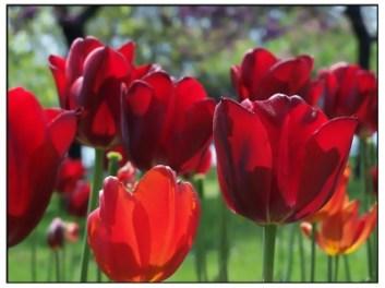 400_1296218965_574384-1024x768-tuliptime