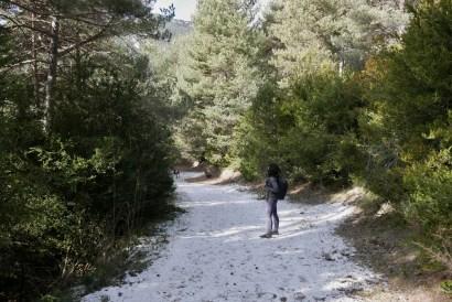 nieve camino en sombra