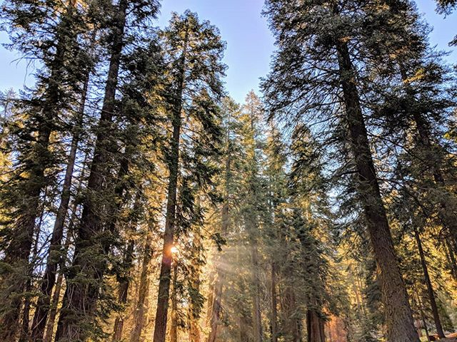 Morning sunrays at the Sequoia National Park.  #sunrays #sunrise #morning #sequoianationalpark #naturephotography #nationalparks #nature #amateurphotographer #amateurphotography #photographer #photography #pixel2xlphotography