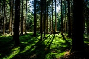 nature-forest-trees-environment