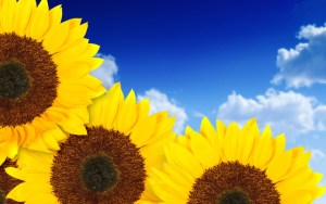Visit allwallpapersfree.blogspot.com