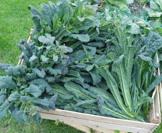 Winter veg 006