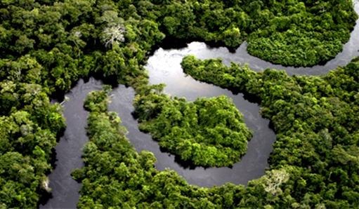 Floresta-Amazonia-RioSinuoso