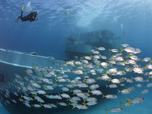 mergulhadordestrocos2