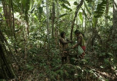 Colabore com o projeto de criação de abelhas nativas por comunidades indígenas na Amazônia