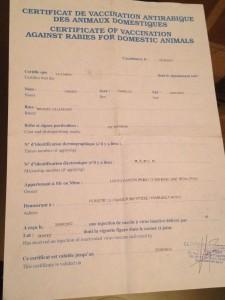 certificat vaccination antirabique rage chien chienne maroc