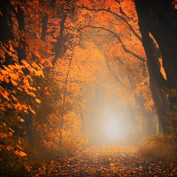 L'automne - Haïkus des lecteurs
