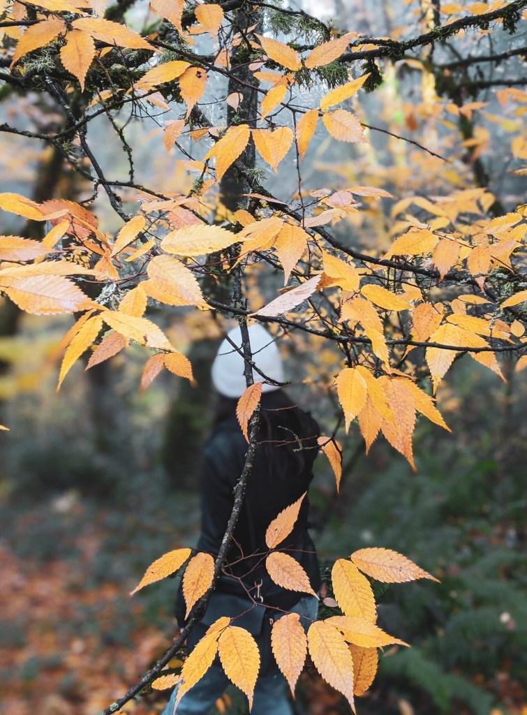Portland Oregon Fall Foliage