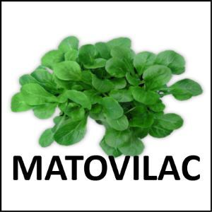 Matovilac