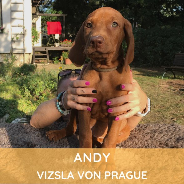 Andy Vizsla von Prague