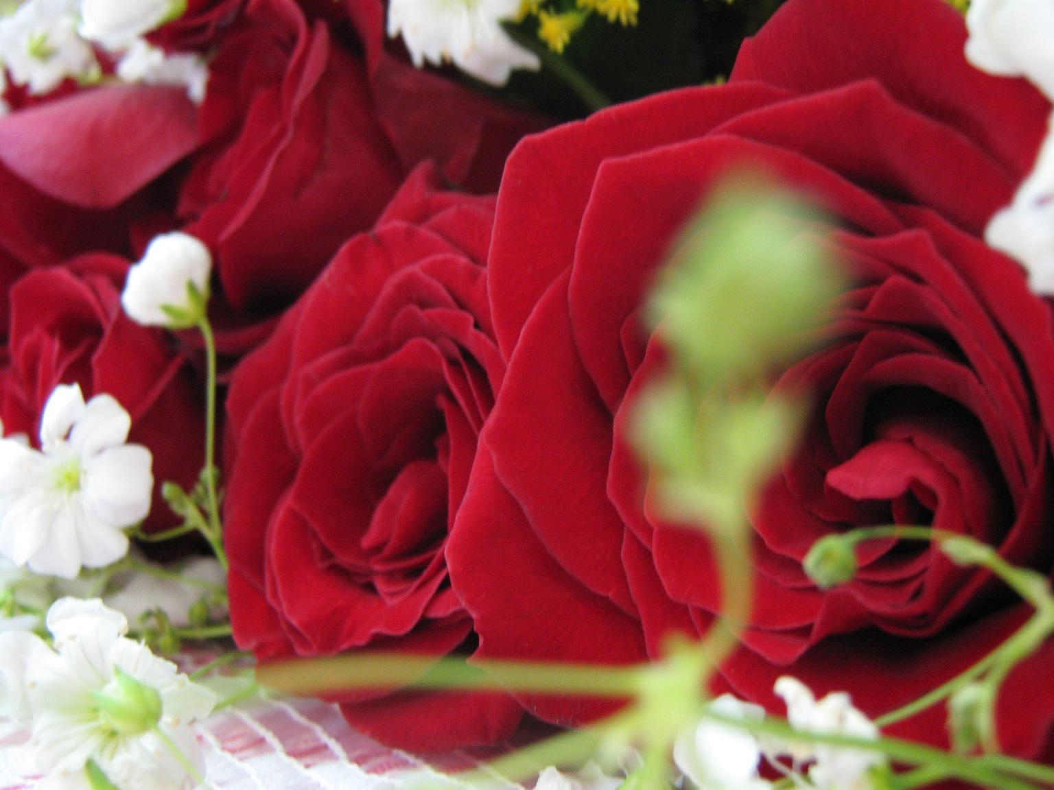 Ojalá la belleza de éstas flores represente aunque sea un poco el amor que tengo por mi familia.