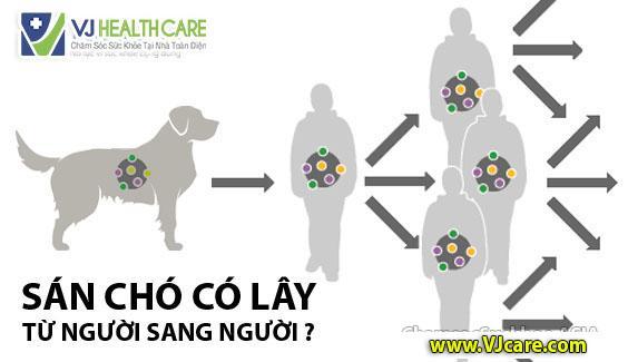 sán chó có lây từ người sang người không bệnh sán chó có lây không ASIA Health