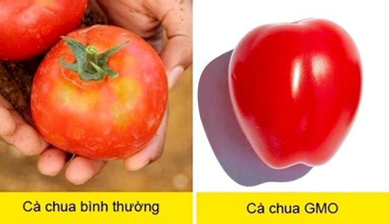 cach phan biet thuc pham bien doi gen  Mách bạn nhận biết thực phẩm biến đổi gen cực đơn giản cach phan biet thuc pham bien doi gen gmo bang mat thuong