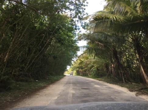 Huvalu Forest