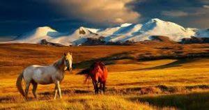 Екскурсії в Монголії