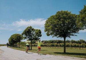 Grad Ilok_utrka_vinogradi3
