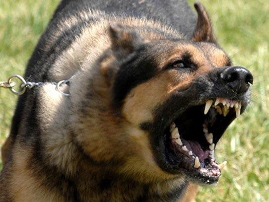 Собак необходимо проверять на бешенство! Фото: drive2.ru