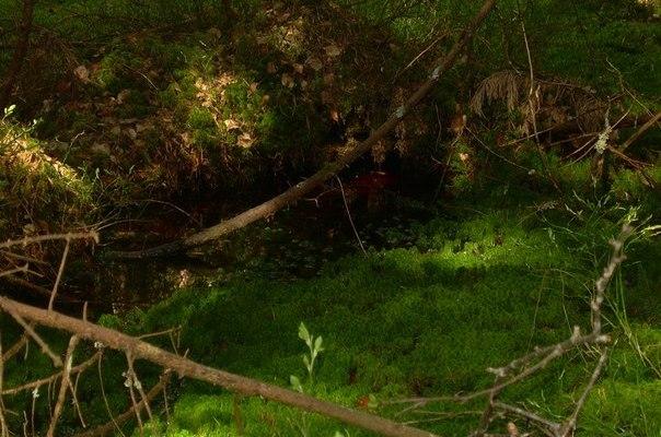 болото лес