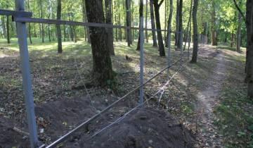 деревья, витебск, софийский собор