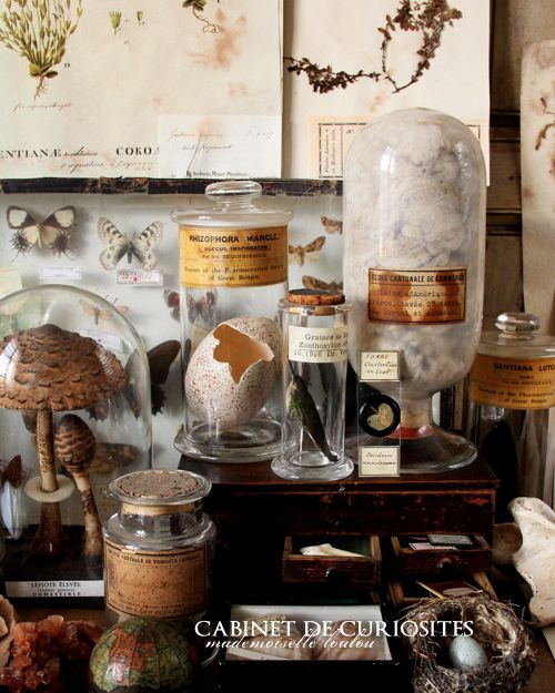 Cabinet of curiosities, so much to see - via BlackPool
