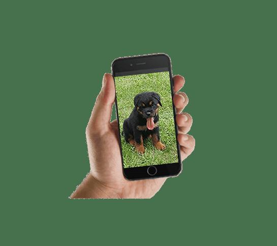 Twitter Puppy Photo Updates