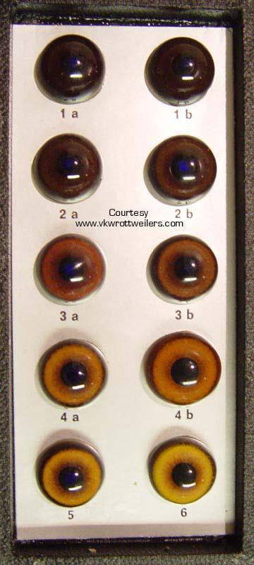 ADRK Rottweiler eye chart