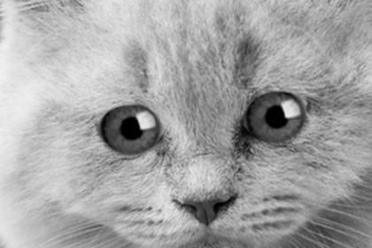 Jaarlijks meer dan 1400 katten geëuthanaseerd in Brussel. Tijd voor verplichte sterilisatie van katten!