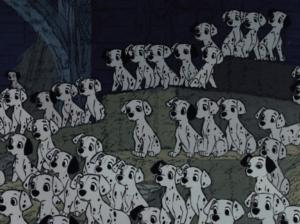 101-Dalmatians puppies