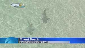 Sharks Spotted Near Shore Of Miami Beach [Video]