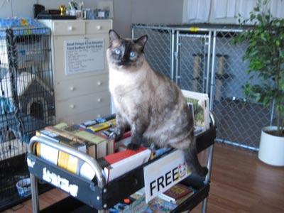 free cat sudbury ontario # 2