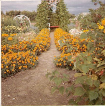 Mom's flower garden. She grew vegetables too.