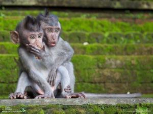 Monkeys surprised