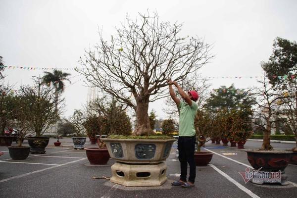 Chợ hoa ngày 26 Tết ở Đà Nẵng ế ẩm chưa từng có