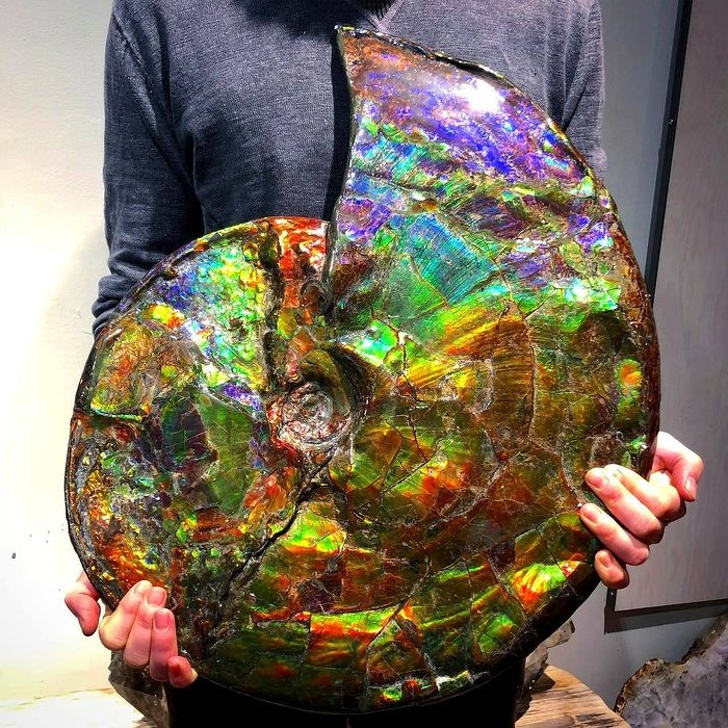 22 vezes em que a natureza foi muito criativa ao misturar cores