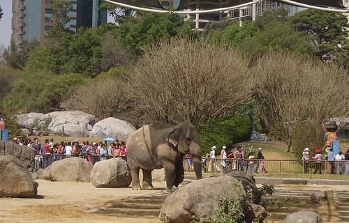 zoo chapultepec