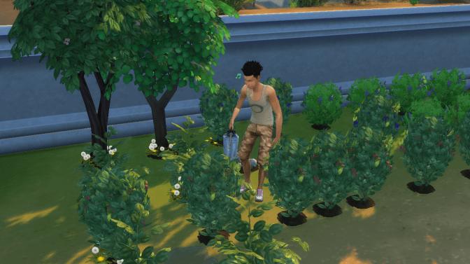 Aspen Gardening
