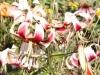Sommerfest in der Gartenanlage Süd