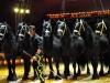 Zirkus Aeros gastiert in Greiz